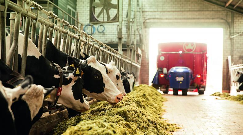 Weender Analyse - Kühe im Stall am Futtertisch